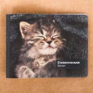 """Обложка на студенческий """"Серый котенок"""""""