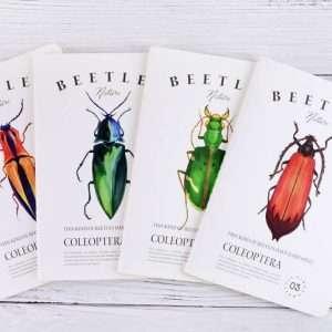 """Тетрадь """"Beetles"""", А5 (№1)"""